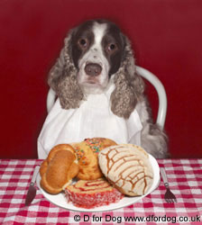 foods you should not feed to your dog