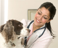 dog health check