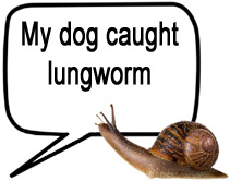 dog lungworm case studies