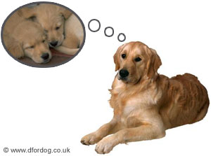 Natural Treatment For False Pregnancy In Dogs