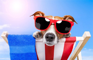summer dog in sunglasses