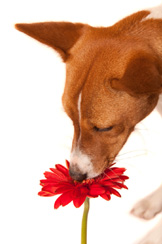 plants and flowers toxic to dogs