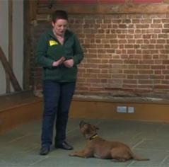 Dog Training Made Easy by Dogs Trust