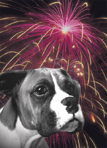 dog fireworks fear