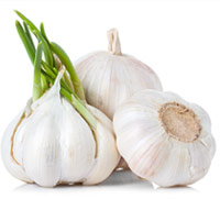 garlic is poisonous to dogs