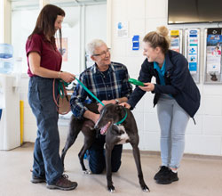 Paul O'Grady says 'Give Greyhounds a Chance'