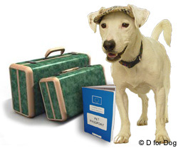 Pet travel rules change 1st january 2012 | d for dog.
