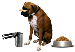 Is processed pet food harmful?