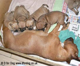 Choosing a puppy from a litter