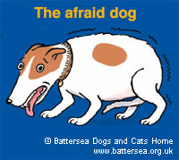 The afraid dog