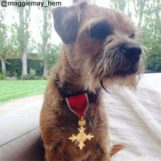 Andy Murray's dog Maggie wears OBE