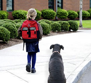 dogs abandoned as children go back to school