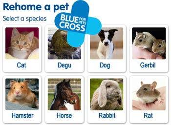 Blue Cross rehome a pet
