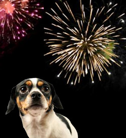 restrict fireworks for our animals and pets