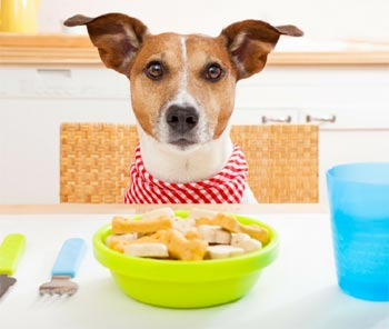 Compare Dog Food >> Compare Dog Food Quality Price Which Dog Food Is Best