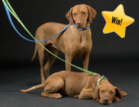 win a dog collar and lead
