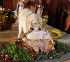 dog eating Christmas turkey