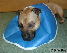 dog sleeping in a soft blue recovery collar