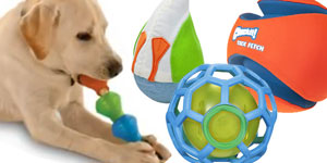 dog toys galore