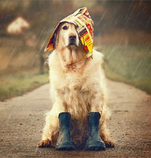dog getting wet in the rain
