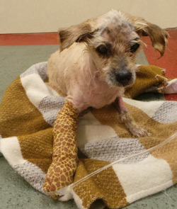 Dog Who Survived the Odds Seeks Loving Home
