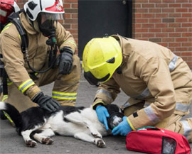 Equip UK Fire Service with Pet Oxygen Masks