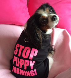 Lucy's Law Stop Puppy Farming
