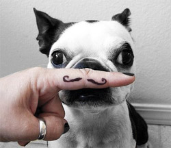 Canine Prostate Awareness Movember dog with moustache