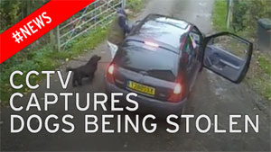 Image from CCTV of dogs being stolen