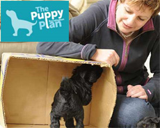 The Puppy Socialisation Plan