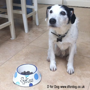 Sykes and his new personalised dog bowl