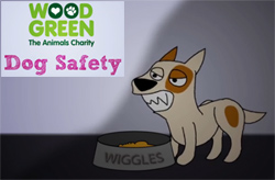 Wood Green dog safety video and workshops