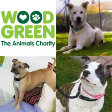 Wood Green Animal Charity Restricts Viewing of Dogs