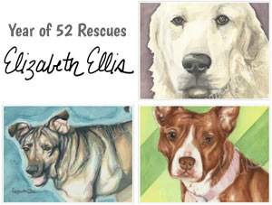 Elizabeth Ellis Year of 52 Rescues