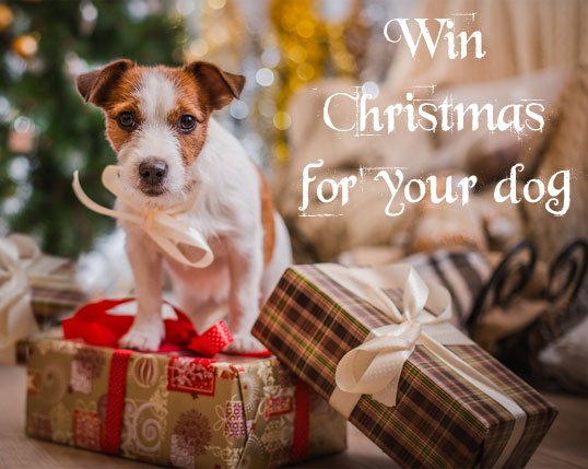 Dog Christmas quiz competition 2016