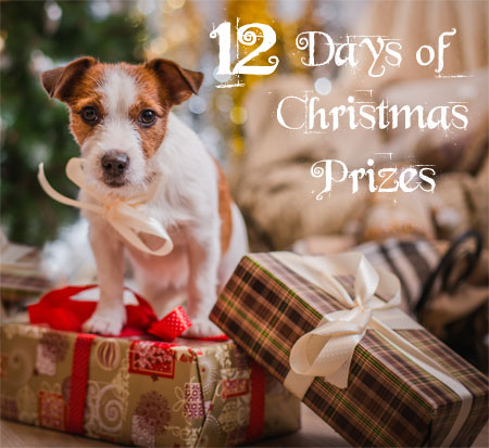 Dog Christmas competition 2017