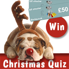 Dog Christmas quiz competition