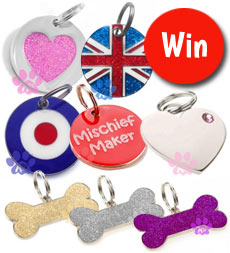 win an engraved dog id tag