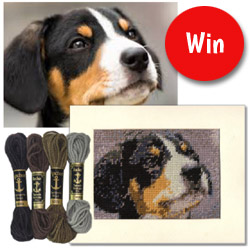 win a tapestry kit of your dog