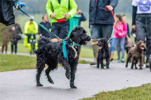 Woof Walkies for Cancer Research UK