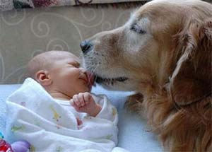 cute dog and baby pic