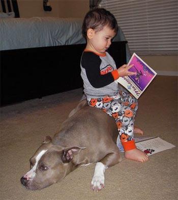 Cute Dog Pics Best Babysitters Part 2
