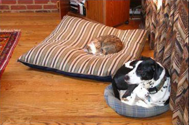 cat in dog's bed, dog in cat's bed