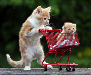 cat shopping