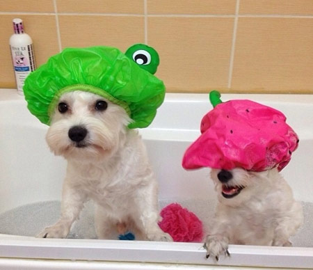 cute dogs in bath hats