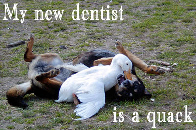 Funny Pics - Dogs, Teeth and the Dentist