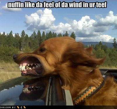 dog in wind
