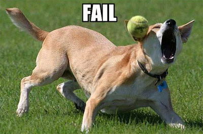 dog fails catching ball