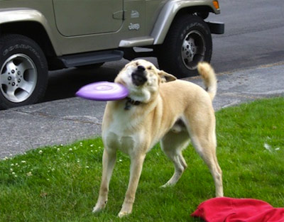 dog hit by frisbee