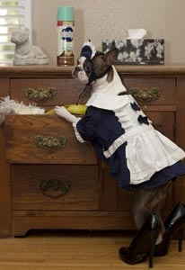 dog doing housework